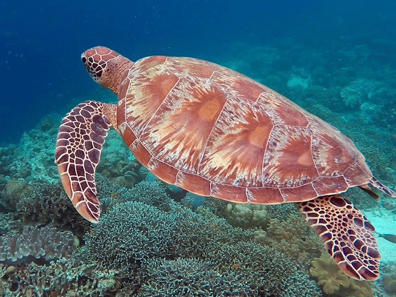 Turtle Point